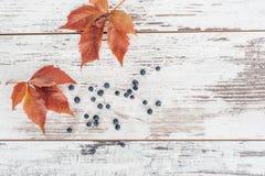Φύλλα και μούρα του άγριου σταφυλιού στον ξύλινο πίνακα Στοκ φωτογραφία με δικαίωμα ελεύθερης χρήσης