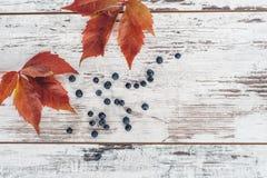 Φύλλα και μούρα του άγριου σταφυλιού στον ξύλινο πίνακα Στοκ Εικόνα