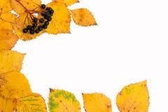 Φύλλα και μούρα το φθινόπωρο Στοκ Φωτογραφίες
