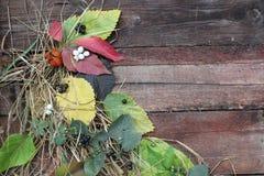 Φύλλα και μούρα φθινοπώρου στον πίνακα Στοκ Φωτογραφία