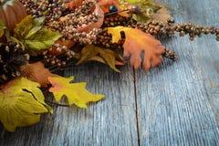 Φύλλα και μούρο φθινοπώρου Στοκ Εικόνα
