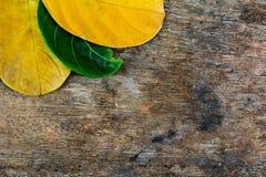 φύλλα και ξύλινο υπόβαθρο Στοκ Εικόνες