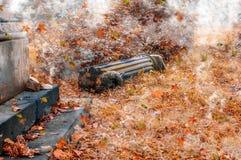 Φύλλα και ομίχλη φθινοπώρου Στοκ φωτογραφίες με δικαίωμα ελεύθερης χρήσης