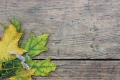 Φύλλα και λουλούδι φθινοπώρου Στοκ Εικόνες