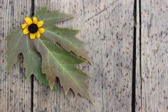 Φύλλα και λουλούδι φθινοπώρου Στοκ φωτογραφίες με δικαίωμα ελεύθερης χρήσης