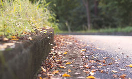 Φύλλα και χλόη πτώσης φθινοπώρου στοκ φωτογραφία με δικαίωμα ελεύθερης χρήσης