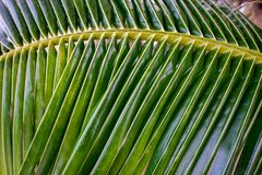 Φύλλα καρύδων Στοκ φωτογραφία με δικαίωμα ελεύθερης χρήσης