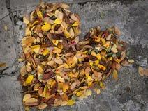 φύλλα καρδιών που γίνοντα&i Στοκ Εικόνες