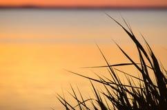 Φύλλα καλάμων από το ηλιοβασίλεμα Στοκ φωτογραφία με δικαίωμα ελεύθερης χρήσης