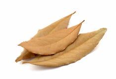 Φύλλα κόλπων Στοκ φωτογραφία με δικαίωμα ελεύθερης χρήσης