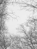 φύλλα κλάδων Στοκ Φωτογραφία