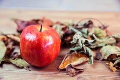 Φύλλα μήλων και φθινοπώρου Στοκ Φωτογραφίες
