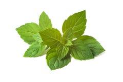 Φύλλα μεντών Στοκ Εικόνα
