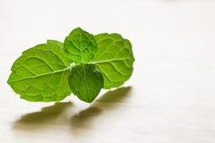 Φύλλα μεντών στοκ φωτογραφία με δικαίωμα ελεύθερης χρήσης