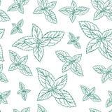 Φύλλα μεντών, peppermint που απομονώνεται στο άσπρο υπόβαθρο, συρμένα χέρι διανυσματικά άνευ ραφής σχέδια, πικάντικα χορτάρια, σύ διανυσματική απεικόνιση