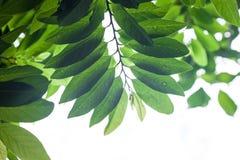 Φύλλα με τη δροσιά στοκ εικόνες