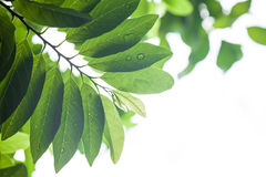 Φύλλα με τη δροσιά στοκ φωτογραφία