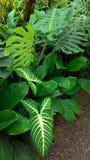Φύλλα με τις διαφορετικά μορφές και τα μεγέθη Στοκ φωτογραφία με δικαίωμα ελεύθερης χρήσης