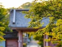 Φύλλα με τον ιαπωνικό ναό στο υπόβαθρο Στοκ φωτογραφία με δικαίωμα ελεύθερης χρήσης