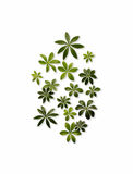 Φύλλα μπαλτάδων στοκ εικόνες