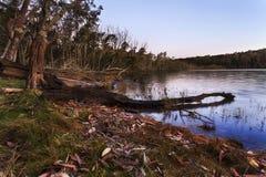 Φύλλα ξύλων λιμνών Durras καθορισμένα Στοκ Εικόνες