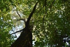 Φύλλα ουρανού Στοκ φωτογραφίες με δικαίωμα ελεύθερης χρήσης