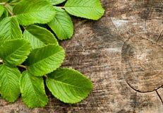 Φύλλα πέρα από το ξύλινο υπόβαθρο με το διάστημα αντιγράφων Στοκ φωτογραφία με δικαίωμα ελεύθερης χρήσης