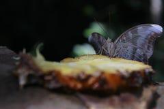 Φύλλα πεταλούδων Στοκ εικόνα με δικαίωμα ελεύθερης χρήσης