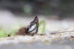 Φύλλα πεταλούδων Στοκ Εικόνες