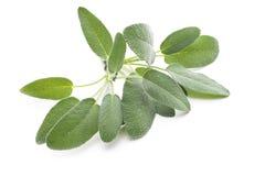 Φύλλα που απομονώνονται λογικά στο λευκό Στοκ εικόνα με δικαίωμα ελεύθερης χρήσης
