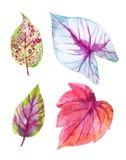 Φύλλα που απομονώνονται τροπικά στο λευκό Στοκ εικόνα με δικαίωμα ελεύθερης χρήσης
