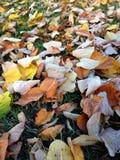 Φύλλα που βάζουν στη χλόη Στοκ Φωτογραφίες