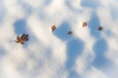 Φύλλα που βρίσκονται στο χιόνι Στοκ Εικόνα