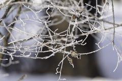 Φύλλα που εγκαταλείπονται στους χιονώδεις κλάδους 2 στοκ φωτογραφία