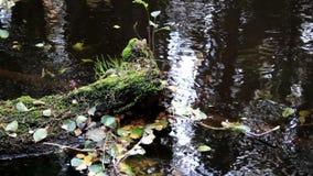 Φύλλα που επιπλέουν στο νερό απόθεμα βίντεο