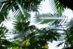 Φύλλα πουλιών Στοκ Φωτογραφίες