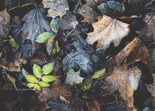 φύλλα που μαραίνονται Στοκ φωτογραφία με δικαίωμα ελεύθερης χρήσης
