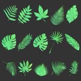 φύλλα που τίθενται Στοκ Φωτογραφίες