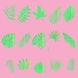 φύλλα που τίθενται Στοκ φωτογραφία με δικαίωμα ελεύθερης χρήσης