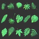 φύλλα που τίθενται Στοκ εικόνα με δικαίωμα ελεύθερης χρήσης
