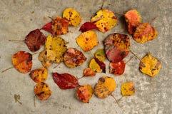 Φύλλα πτώσης που διασκορπίζονται στο σκυρόδεμα Στοκ φωτογραφία με δικαίωμα ελεύθερης χρήσης