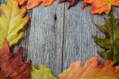 Φύλλα πτώσης σε ένα αγροτικό ξύλινο υπόβαθρο Στοκ Φωτογραφίες