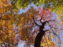 Φύλλα πτώσης στα δέντρα Στοκ εικόνες με δικαίωμα ελεύθερης χρήσης
