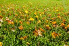 Φύλλα πτώσης στην πράσινη χλόη Στοκ φωτογραφία με δικαίωμα ελεύθερης χρήσης