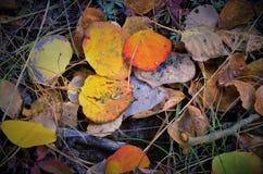 Φύλλα πτώσης στο βουνό του ΚΟΛΟΡΑΝΤΟ Στοκ Εικόνες