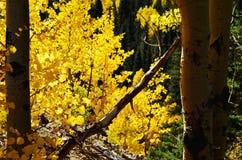Φύλλα πτώσης στο βουνό του ΚΟΛΟΡΑΝΤΟ Στοκ εικόνες με δικαίωμα ελεύθερης χρήσης