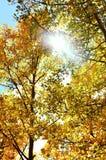 Φύλλα πτώσης στο βουνό του ΚΟΛΟΡΑΝΤΟ Στοκ φωτογραφίες με δικαίωμα ελεύθερης χρήσης