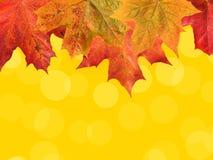Φύλλα πτώσης στο κίτρινο υπόβαθρο Στοκ Εικόνες