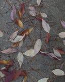 Φύλλα πτώσης στο πεζοδρόμιο Στοκ Εικόνες