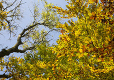Φύλλα πτώσης φθινοπώρου στα δέντρα Στοκ φωτογραφία με δικαίωμα ελεύθερης χρήσης